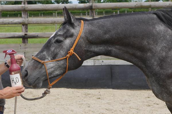 spray anti-mouche cheval
