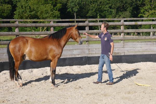 apprendre sur le cheval